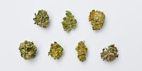 types of cannabis strains