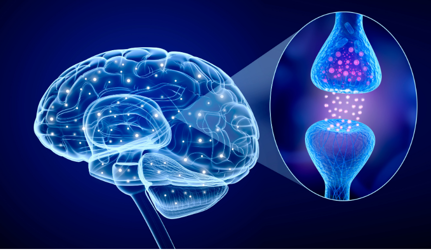 cognitive effects of CBD