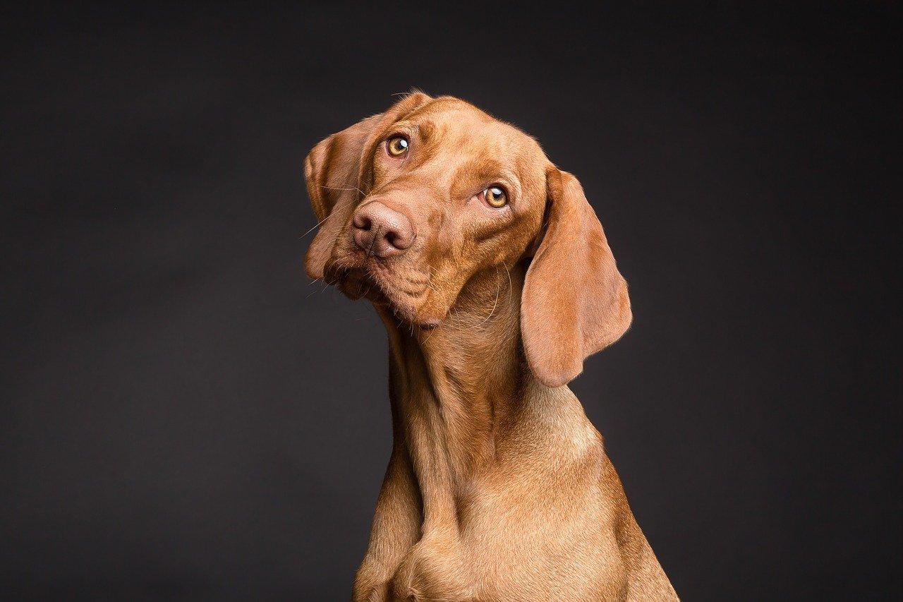 CBD Dog Treats: Are they Worth it?