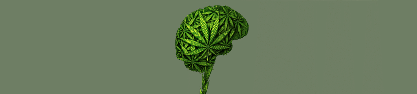 Is CBD a Nootropic? This is How CBD Affects the Brain