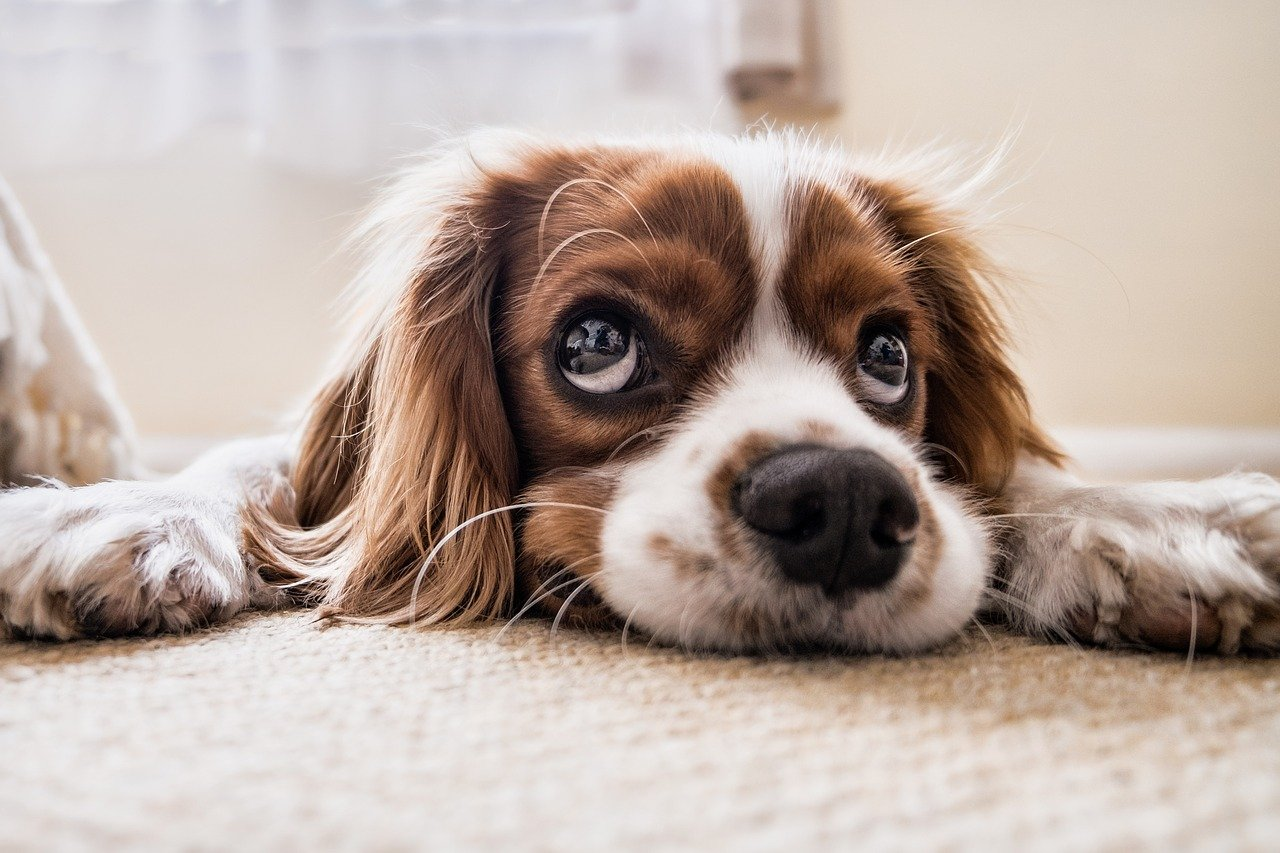 CBD For Dogs: Benefits, Risks, & Our 5 Favorite Products